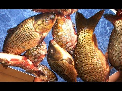 рыбалка карп лещ