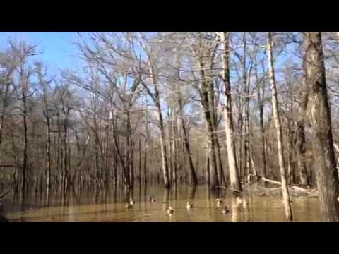 Timber - Watch as we land a monster group of mallards and tear into em!!!