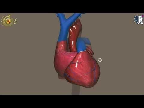 il cuore - un formidabile motore