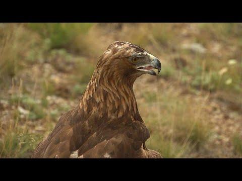 Abenteuer Kasachstan: Falkner Vladimir und sein Gefährte Saddaq