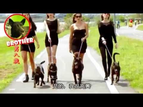 Animals Taiwan 台灣動物協會:史上最棒的認養影片!