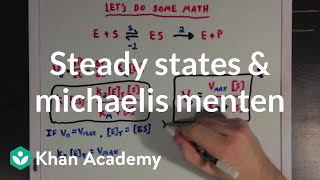 Steady states and the Michaelis Menten equation | Biomolecules | MCAT | Khan Academy
