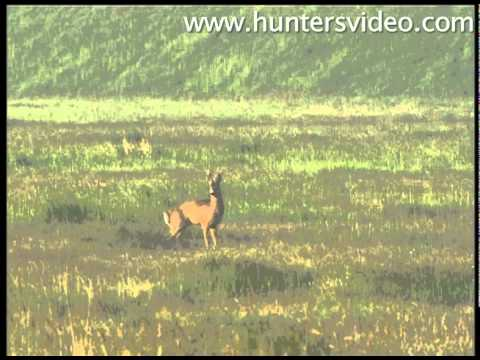Gold Medal Roebucks - Hunters Video