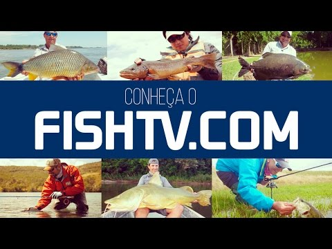 Video of Fish TV