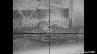 Wiatrówka z butlą na CO2. Czyli polowanie na szczury z wiatrówki