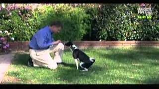 Basenji-Dogs 101