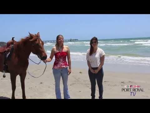 Horses on the Beach Corpus Christi