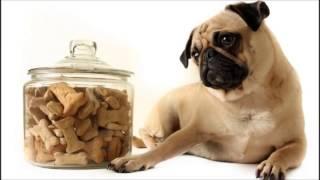 Enfermedades más comunes en los perros relacionadas con la alimentación
