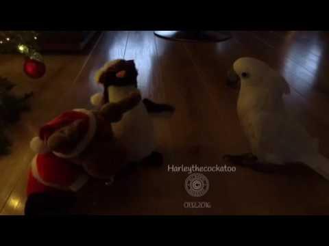 Papukaija ihmettelee tanssivia pehmoleluja