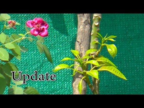 October Fruit Plants and Garden Update