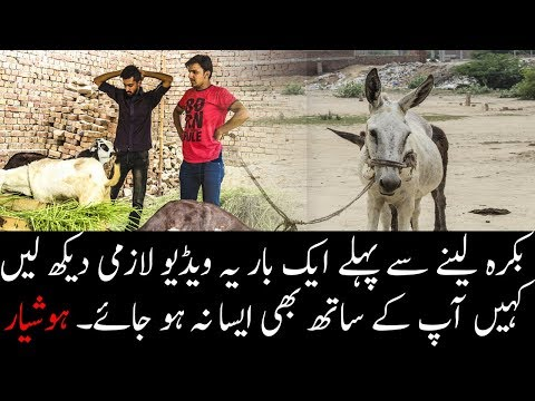 Watch this video at least once before buying something for Qurbani.