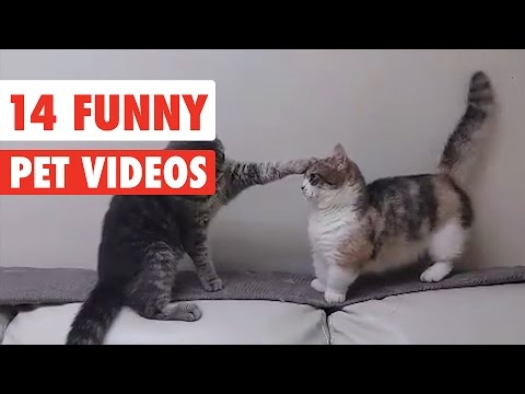 14 Funny Pets | Awesome Pet Videos Compilation 2017