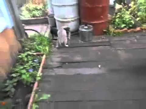 Perrito se encarga de llevar al gato a casa