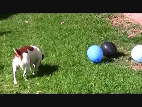 jack vs balloons