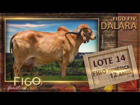 LOTE 14 - FIGO FIV DALARA