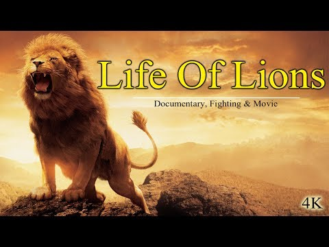 The Lions Life Documentary - Full Movie Of The Last Lions 2017 English Documentary