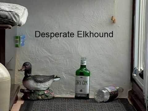 Desperate Elkhound