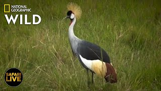 Safari Live - Day 309   Nat Geo Wild by Nat Geo WILD