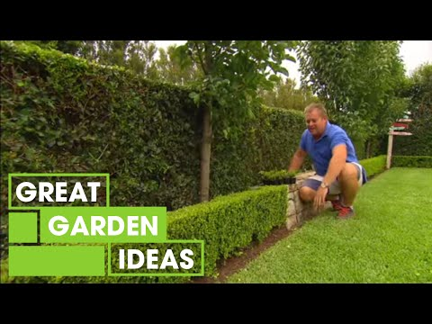 , title : 'Tips & Tricks For Perfect Hedging | Gardening | Great Home Ideas'