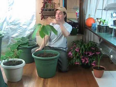 Build A Beautiful Indoor Hydroponic Garden With These Tips