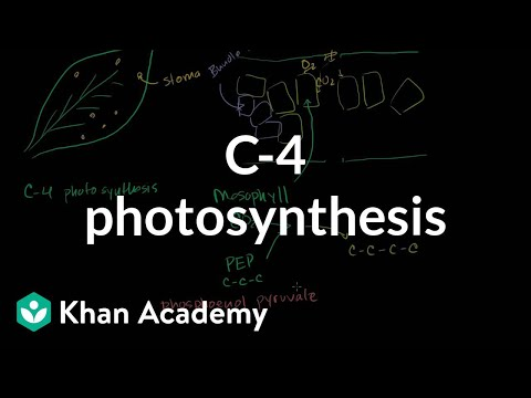 C4 Photosynthesis Video Photosynthesis Khan Academy