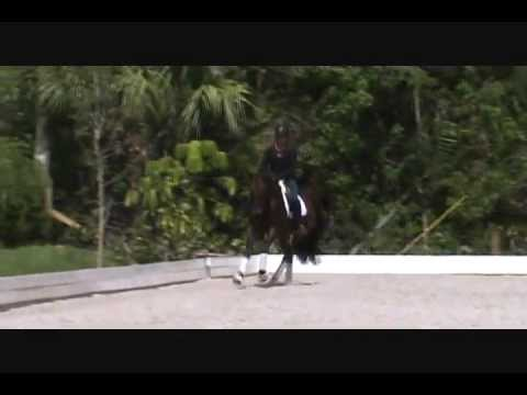 Sirocco - 3 yr old Gelding for Sale