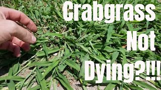 Video DIY how to kill crabgrass.  My crabgrass is not dying.  How to prevent and control crabgrass MP3, 3GP, MP4, WEBM, AVI, FLV Juli 2019