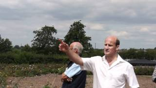 #493 David Austin Roses 2011 - Die Selektionsfelder 1v2