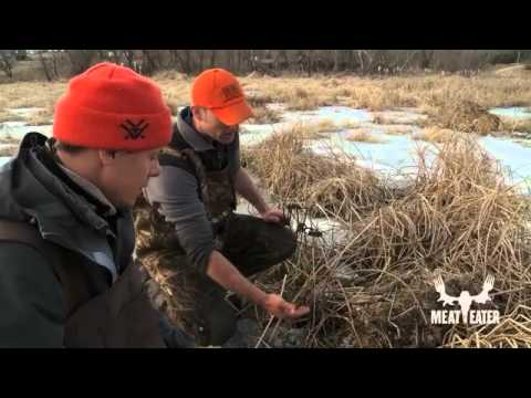 trapping - A super special, never-aired extended MeatEater scene! Steven Rinella and his buddy, Karl Malcolm, set beaver and muskrat traps in Southwestern Wisconsin, bu...