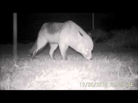 First Test with Ltl Acorn 6210MC trail cam
