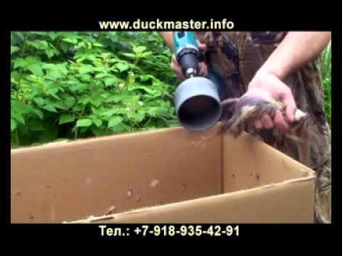 выращивание леща в домашних условиях видео