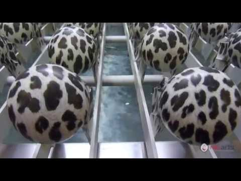 HG Arts – Water Transfer Printing – Automatic Equipment | Lids