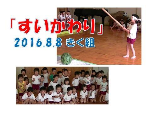 八幡保育園(福井市)すいかわり!2016年8月、きく組(5歳児年長)がチャレンジ!盛り上がりました!
