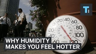 "Ever wondered why weather forecasters give you a ""feels like"" temperature? Humidity can change how hot you actually feel. Your body uses sweat to cool itself off. However, on humid days, your body doesn't efficiently rid itself of sweat and heat, creating a higher risk of heat stroke.Read more: http://www.businessinsider.com/saiFACEBOOK: https://www.facebook.com/techinsiderTWITTER: https://twitter.com/techinsiderINSTAGRAM: https://www.instagram.com/businessinsider/TUMBLR: http://businessinsider.tumblr.com/"