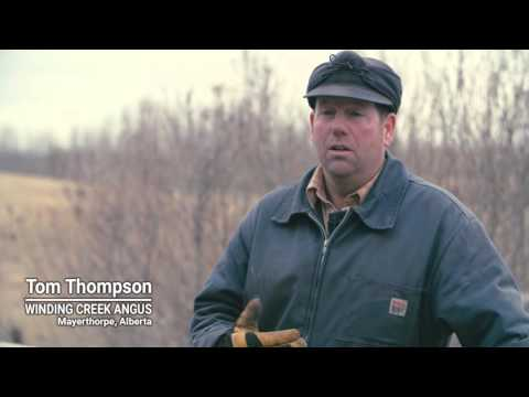 Feed quality in bale grazing during winter