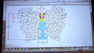 #32 Biochemistry Nerve Transmission/Mitochondria Lecture For Kevin Ahern's BB 451/551