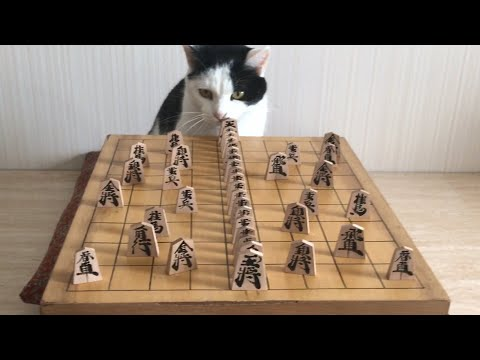 These Cats Are Clever. They're Also Adorable.