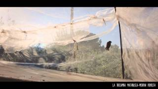 Mentha Piperita -Balkan Gypsy del Bancal- La trocamba matanusca