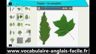 Vocabulaire Anglais Les Arbres (Vocabulaire Anglais Facile)