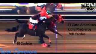 Carrera de El Cadete vs El Gato Americano 5 30 2015 - YouTube
