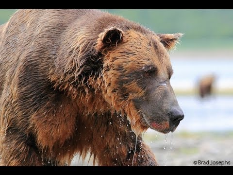 gopro - http://www.alaskabearsandwolves.com/making-of-the-great-bear-stakeout-behind-the-scenes/ When using a GoPro to capture unusually close footage of grizzly bea...