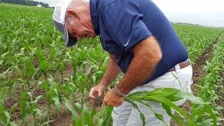 Nonton Northwest Ohio crops get a