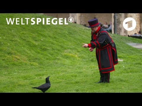 Der Rabenmeister vom Londoner Tower | Weltspiegel