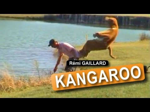 canguro - Dangerously funny videos created and produced by Rémi GAILLARD. http://www.facebook.com/gaillardremi http://twitter.com/nqtv.