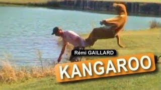 Bad Kangaroo :))