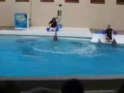 Delphin Show im Tiergarten Nürnberg
