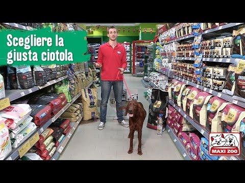 TUTORIAL: La giusta ciotola per il tuo cane | Maxi Zoo