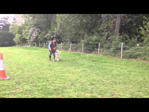 - Fallowfen Gundogs