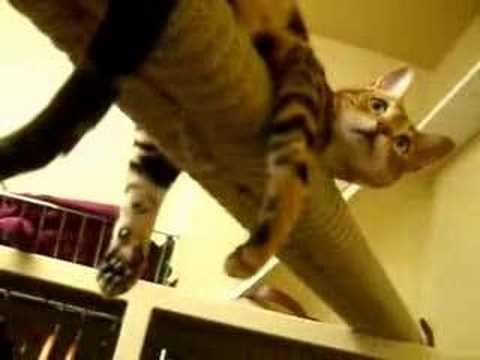 un-giorno-da-gatto-158