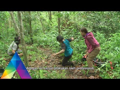 Download Video BERBURU - MONITORING HARIMAU SUMATERA (23/2/16) 3-3